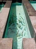разводить рыб в пруде Стоковые Фотографии RF