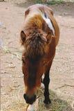 разводить уединение выгона лошади хуторянина Стоковая Фотография