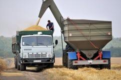 Разгржать зерно от бункера-reloader на тележке Стоковые Изображения RF