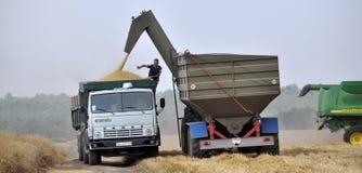 Разгржать зерно от бункера-reloader на тележке Стоковое Изображение RF
