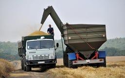 Разгржать зерно от хоппер-транспортеров на тележке Стоковые Фотографии RF