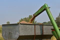 Разгржать пшеницу в коробку зерна Стоковая Фотография RF