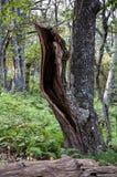 Разделите ствол дерева в лесе стоковое фото rf