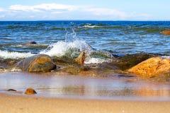 Разделять волну моря на каменном береге стоковое изображение