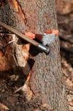 Разделять избивает ось бить молотком клин молотком в дерево стоковые фотографии rf