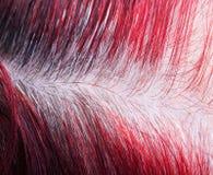 разделять с выращиванными серыми корнями на женщине покрасил голову стоковые фото