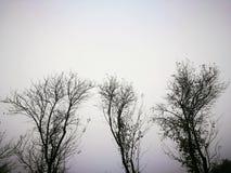Раздетое дерево в утре осени Стоковая Фотография