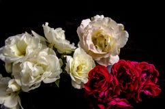 Раздробите ` на участки s красных белых розовых роз Стоковое Изображение