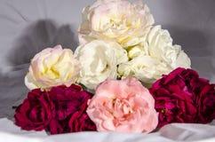 Раздробите ` на участки s роз красных и розовых и белого желтого цвета в стогах Стоковые Фотографии RF
