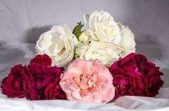 Раздробите ` на участки s роз красных и розовых и белого желтого цвета Стоковое фото RF