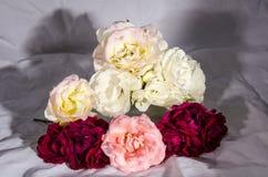 Раздробите ` на участки s роз красных и розовых и белого желтого цвета Стоковые Изображения