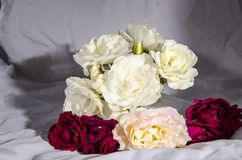 Раздробите ` на участки s роз красных и розовых и белого желтого цвета Стоковая Фотография
