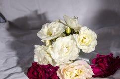 Раздробите ` на участки s роз красных и розовых и белого желтого цвета Стоковые Фото