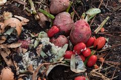 Разлагая vegetable утили смешанные с органической почвой на компосте наваливают стоковая фотография rf