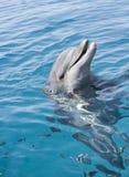 разлейте обнюханного дельфина по бутылкам Стоковое фото RF