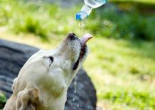 разлитое по бутылкам питье i Стоковое Изображение RF