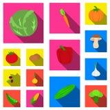 Различные виды значков овощей плоских в собрании комплекта для дизайна Сеть запаса символа вектора овощей и витаминов Стоковое фото RF
