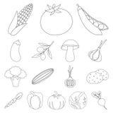 Различные виды овощей конспектируют значки в комплекте Стоковые Фото