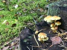 Различные древообразные очень вкусные грибы на стволе дерева журнала покрытого с естественными зелеными мхом и травой с листьями  стоковые изображения rf