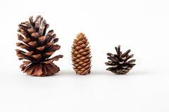Различные конусы видов, украшения рождества стоковое фото rf