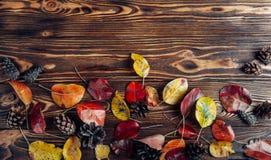 Различные листья осени стоковые изображения rf