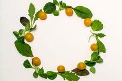 Различные листья салата и томаты вишни на белой предпосылке Стоковые Изображения
