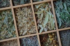 Различные листья чая в маленьких коробках сверху стоковое изображение