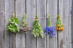 Различные медицинские травы на деревянной стене Стоковая Фотография RF
