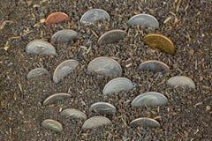 Различные монетки американских денег осеменяя, растя в почве Стоковое Фото