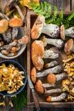 Различные одичалые грибы прямо от леса Стоковая Фотография