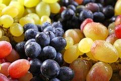 Различные разнообразия виноградин Стоковые Изображения