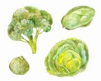Различные разнообразия капусты Пекина, брокколи, белого Waterc Стоковое фото RF