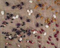 Различные разнообразия фасолей на текстуре Стоковые Изображения RF