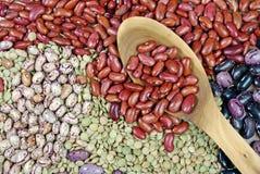 Различные разнообразия фасолей почки Стоковая Фотография RF