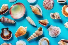 Различные раковины моря на сини Стоковые Изображения