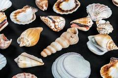 Различные раковины моря на черноте Стоковое Фото
