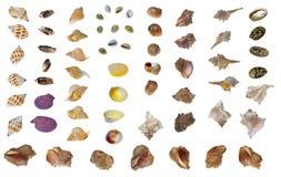 различные раковины Стоковое Фото