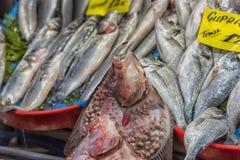 Различные рыбы на встречных рыбах ходят по магазинам в Стамбуле Стоковая Фотография RF