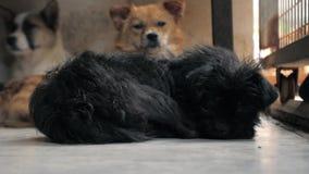 Различные смешанные собаки породы за загородками Собаки в укрытии или животном питомнике Укрытие для концепции животных сток-видео