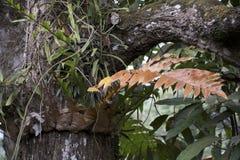 Различные сухие желтые лист на зеленой предпосылке дерева стоковые изображения
