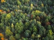 Различные тени зеленого цвета Стоковые Изображения RF