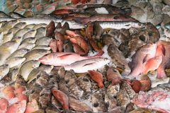 Различные типы рыб показаны на таблице для продажи в рынке Смешивают с льдом для того чтобы сохранить рыбу свою свежесть Стоковые Изображения