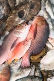 Различные типы рыб показаны на таблице для продажи в рынке Смешивают с льдом для того чтобы сохранить рыбу свою свежесть Стоковая Фотография RF