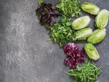 Различные типы салата выходят на серую предпосылку стоковые фотографии rf