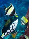 Различные тропические рыбы стоковое фото rf