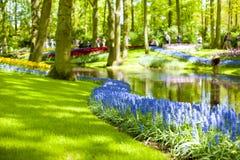 Различные цветки белый и голубой весной парк, солнечный свет и озеро скопируйте космос Стоковые Фото