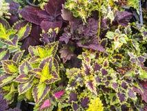 Различные цветки в баках на рынке фермы Стоковое фото RF