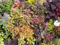 Различные цветки в баках на рынке фермы Стоковые Фото