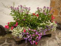 Различные цветки в деревянной клети цветков Стоковое фото RF