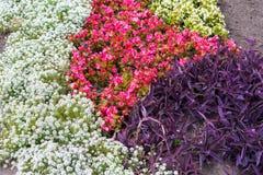 Различные цветки в дизайне Стоковые Фотографии RF
